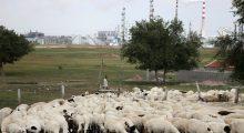 China reporta un caso de peste bubónica en un pastor de Mongolia Interior